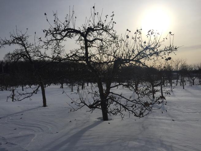 L'hiver au Vergers du Cap